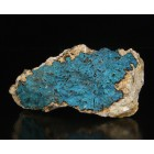 Chrysocolle Italy M02389